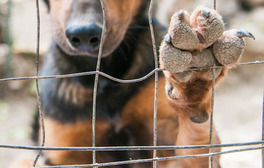Animal Welfare Law and the Sentient Animal: From Legislative Recognition to Definition
